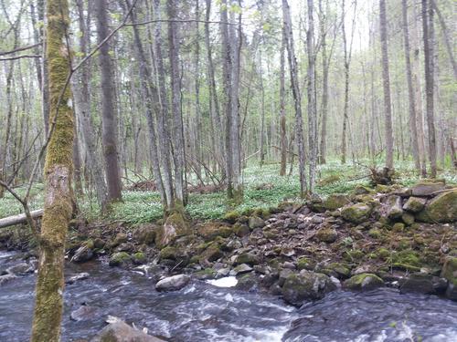 Hvitveisskog ved Åstaddammen