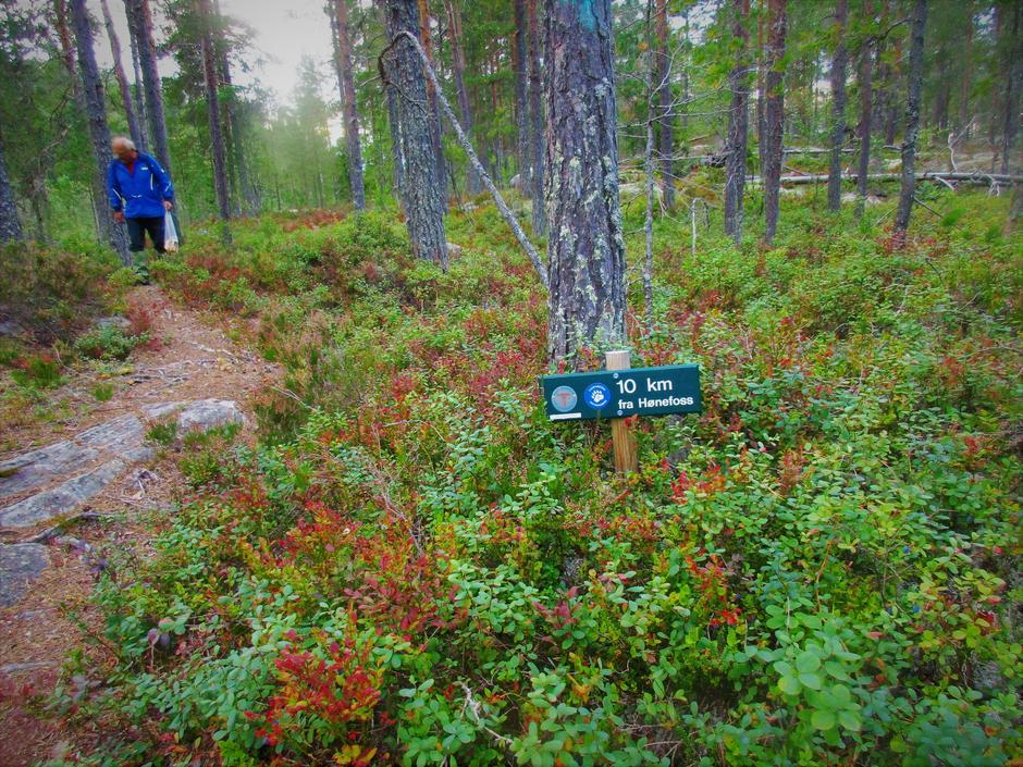 10 km fra Hønefoss.