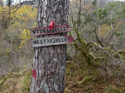 Starten av sti fra Helle mot Storafjellet
