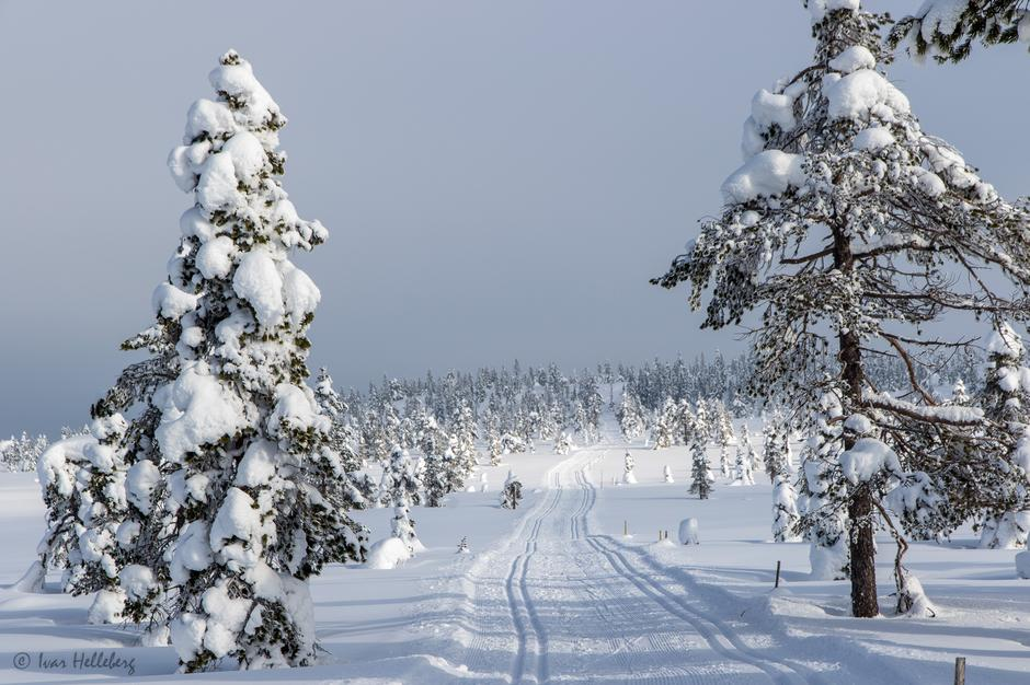 Når kommer snøen og skiløypene?