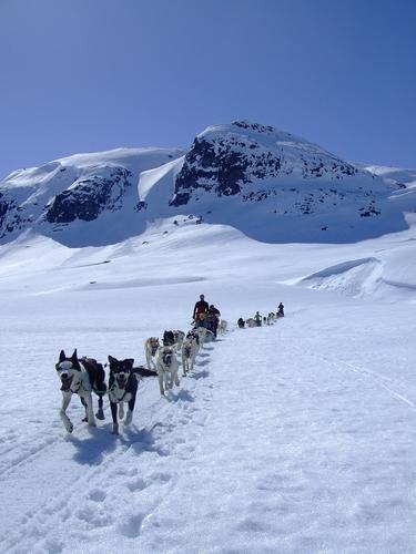 Med hundespann i vinterfjellet!