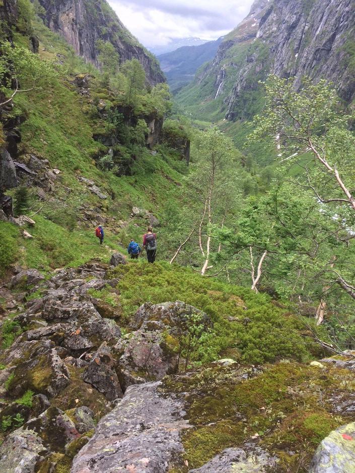 Onsdag 14.6: Frodige Tyssedalen. På vei mot Ulvik i Hardanger.