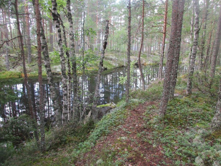 Fin natur, med den gamle vannkilden til folk i Grønvollsgrenda.