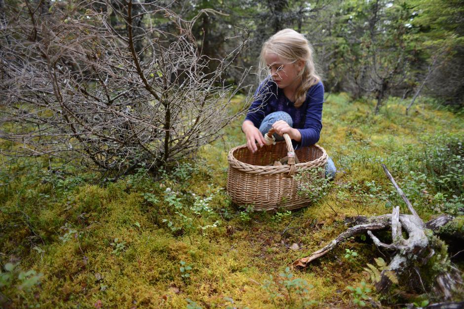 På jakt etter skogens gull!