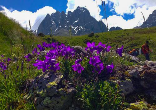 Blomsterprakt i fjellene.