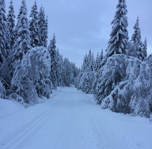 Mye snø og svært bra løyper på Vindfjell og Skrim