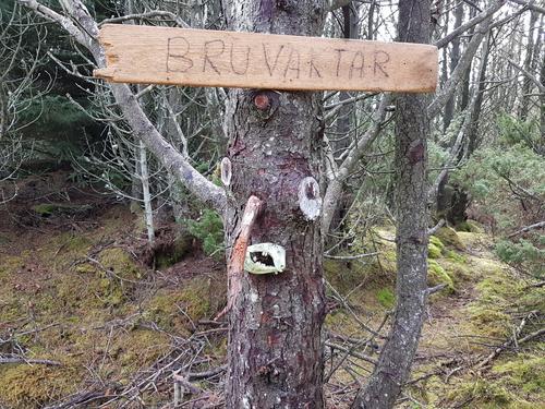 Her på Trollstien til Gløvrebu