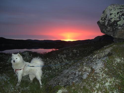 Soloppgang på kalhovd, Hardangervidda