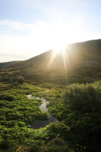 Hardangervidda i sommerprakt