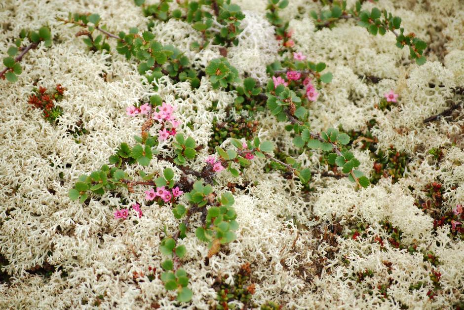 Blomster i Grimsdalen.