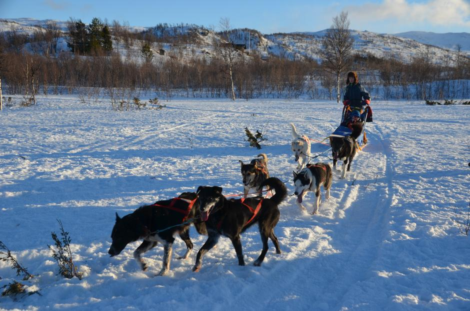 Flotte hunder som liker å være i fart!