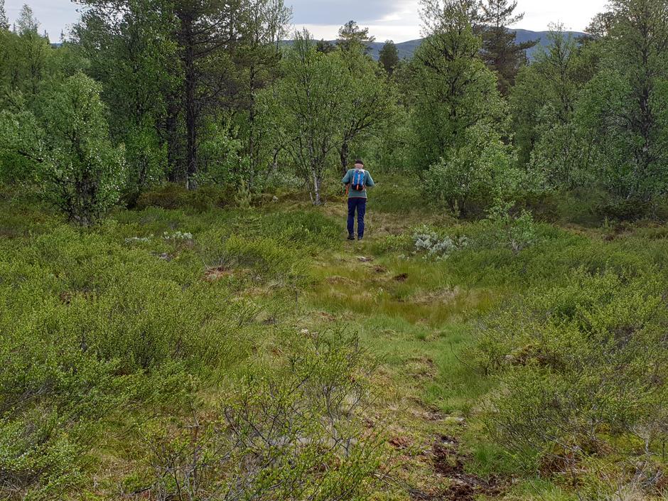 Fin mjuk skogbunn fra dammen opp til Landbruksveien