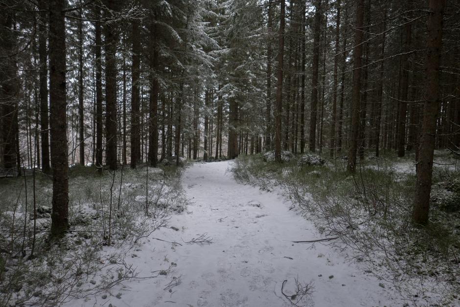 Bli med på vinterfottur i Hakadal!