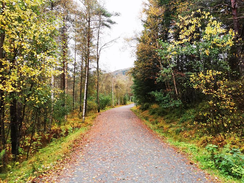 Godt opparbeidet grusvei i Myrdalen. Turområdet er mye brukt.