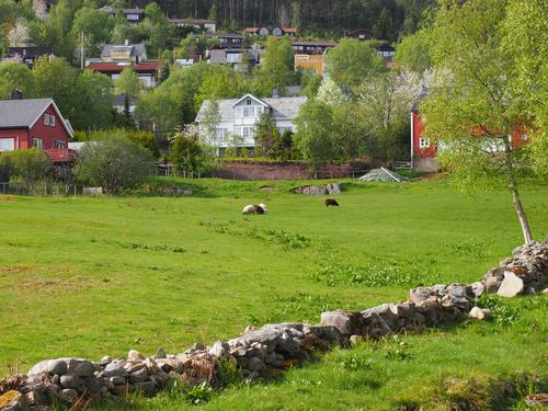 Verdens aktivitetsdag og utemiddag på Romsdalsmuseet