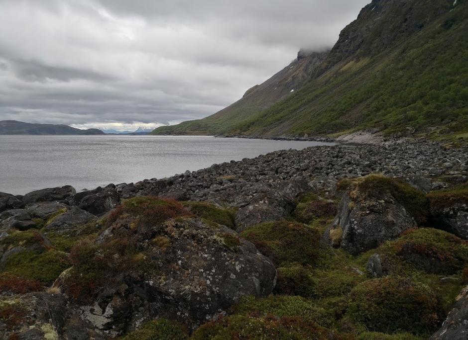 Skarsteineset. Her ser østover langs nordsiden av øya.