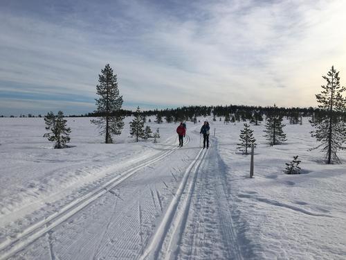 Føremelding uke 9: Klisterføre på Hedmarksvidda