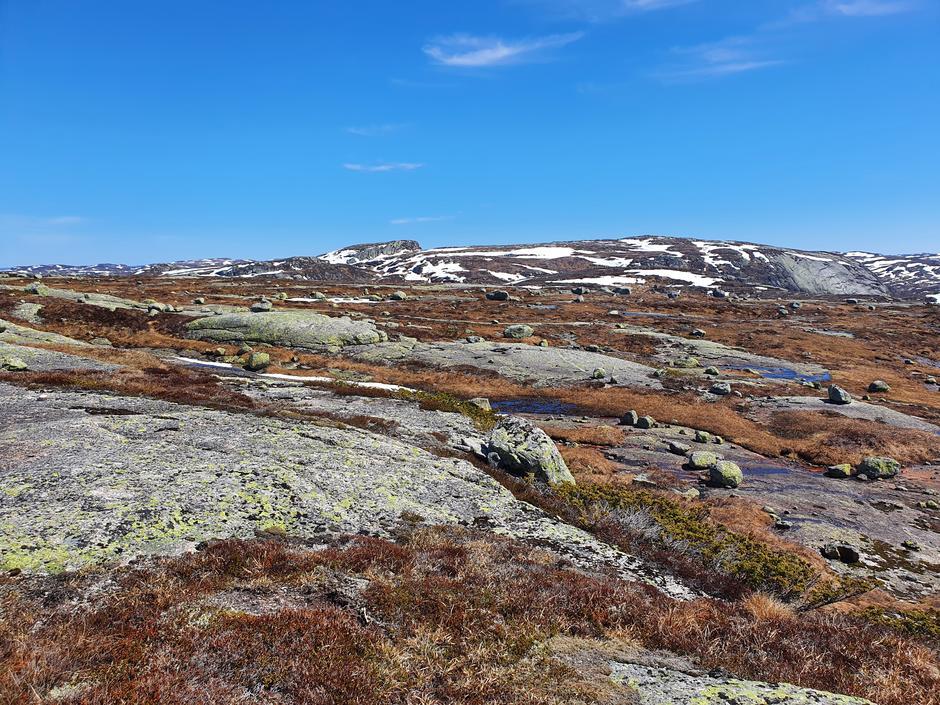 Bergehei, 980 m.o.h, nord for Pytten(Ljosland), 29.5.2021