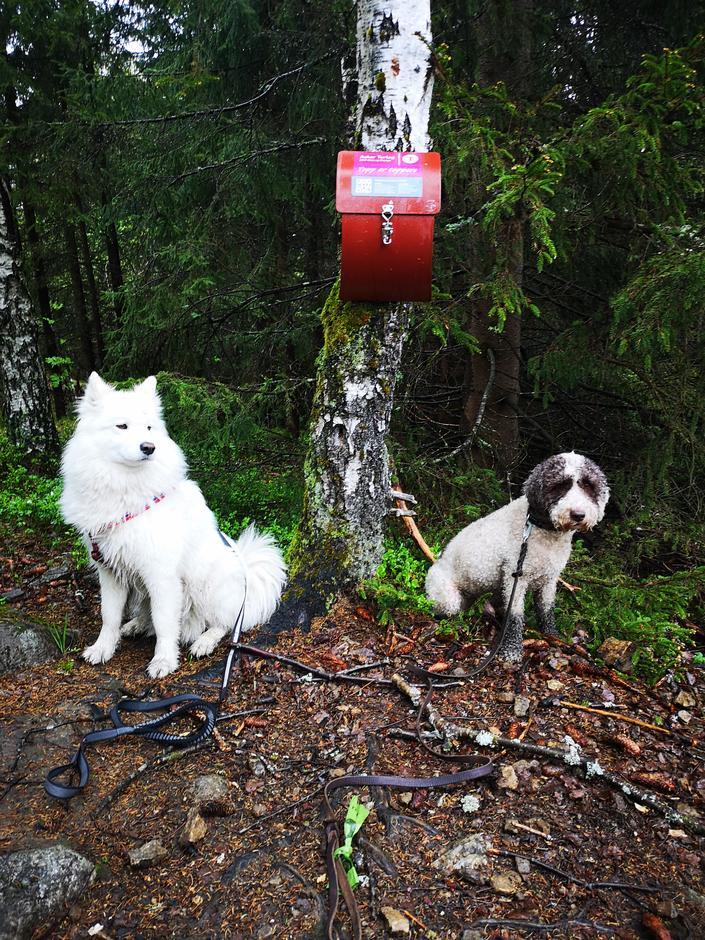 To gode venner på Høgåstoppen