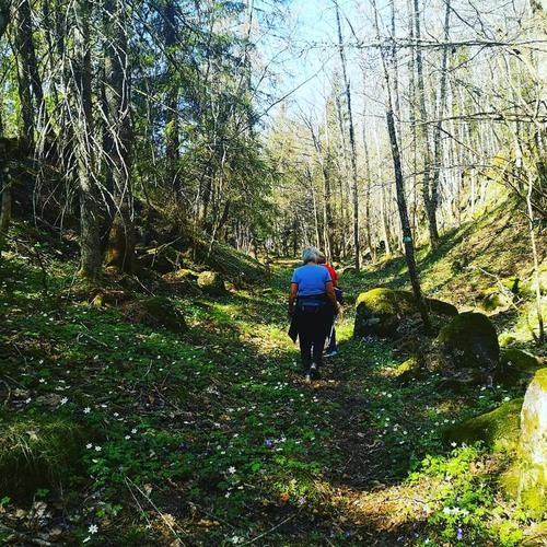 Vandring i Landsverkskog.