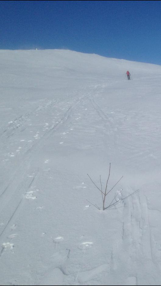 Mye snø har flere steder ført til at kvistene er under snøen.Hjelp oss å dra dem opp om mulig.