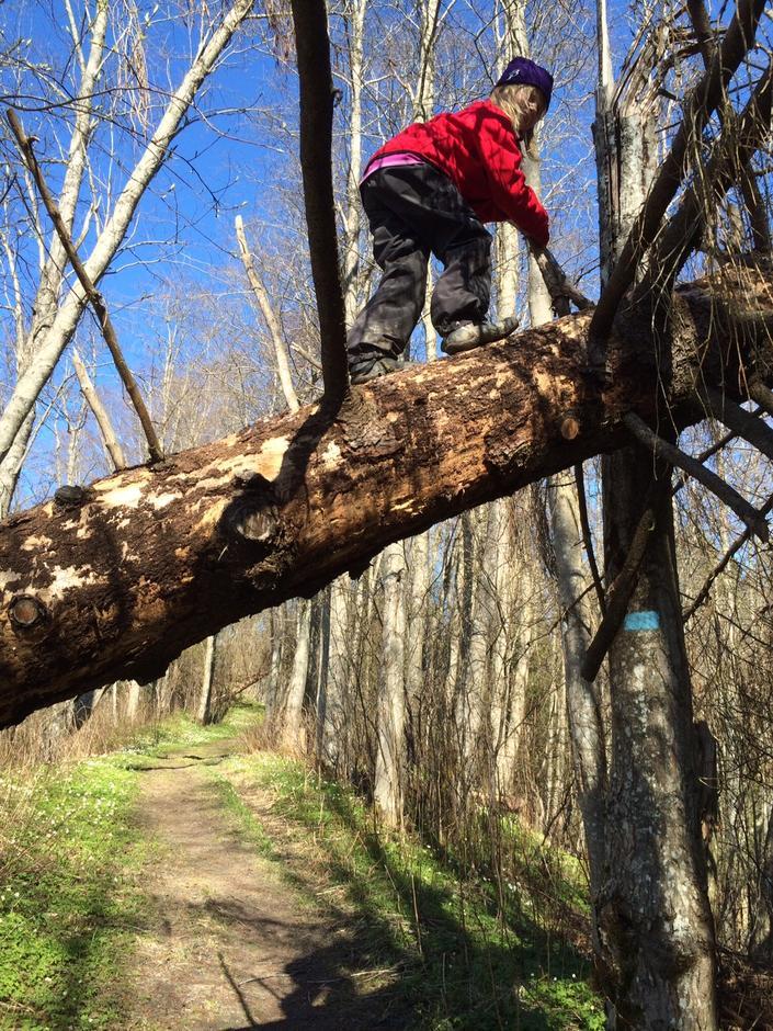 Klatring på falne trær i ravinene ved Gardermoen