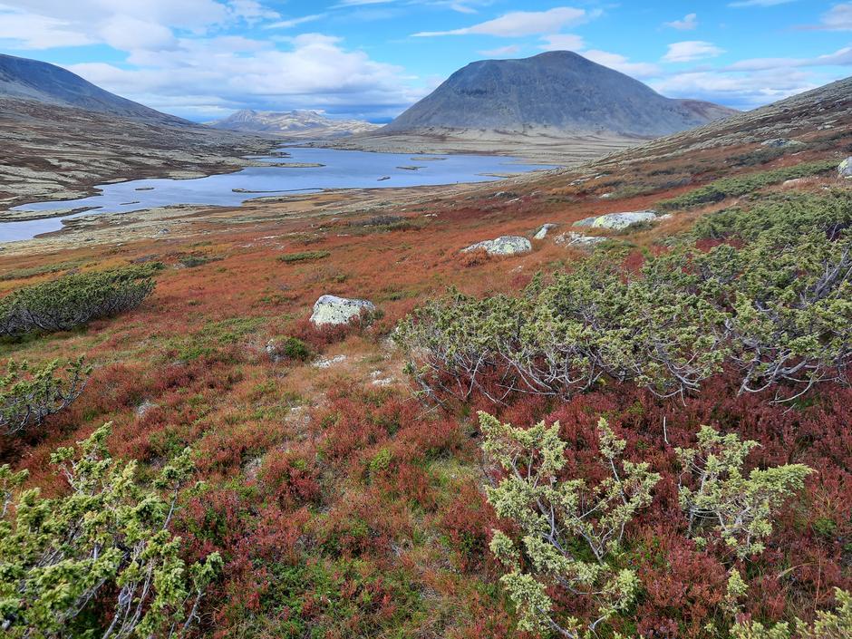 Fargesprakende høst i Alvdal vestfjell