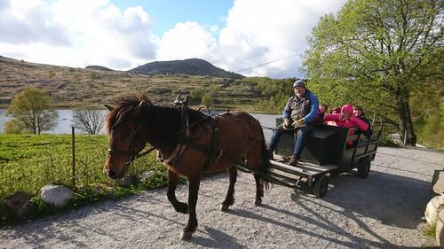 Arvid og hesten Symona med FTU deltagere i kjerre på Gramstad