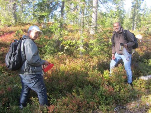 Blåbærtur i Lardal med Norskskolen