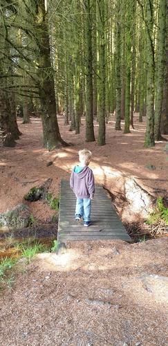 tur i skog