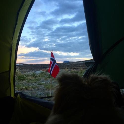 Vega studerer morgendagens turmål ifra teltåpningen - Bitihorn.