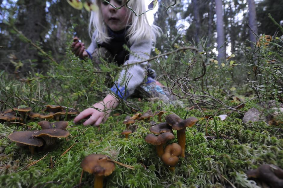 Ta med barna i jakten på skogens gull...