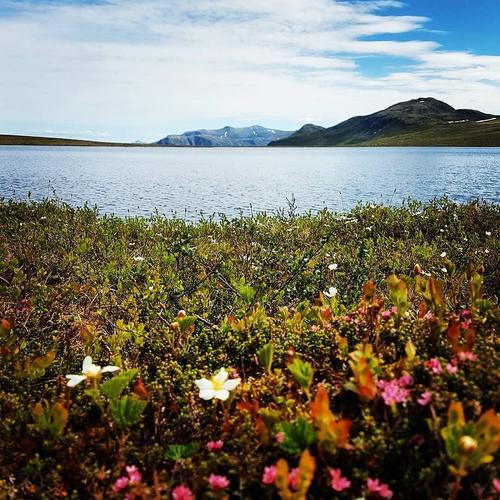 Bilde er tatt på Meisalfjellet i Møre og Romsdal.