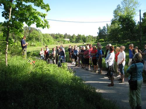Flere tusen år gammel kalk-lindeskog på Brønnøya. Foto: Camilla Mohr