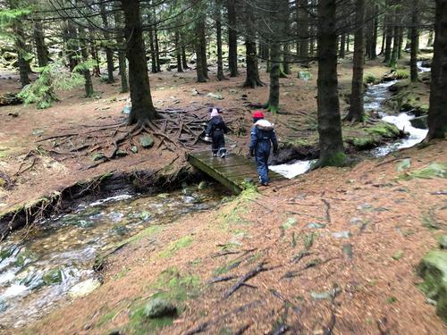 Tur i skogen