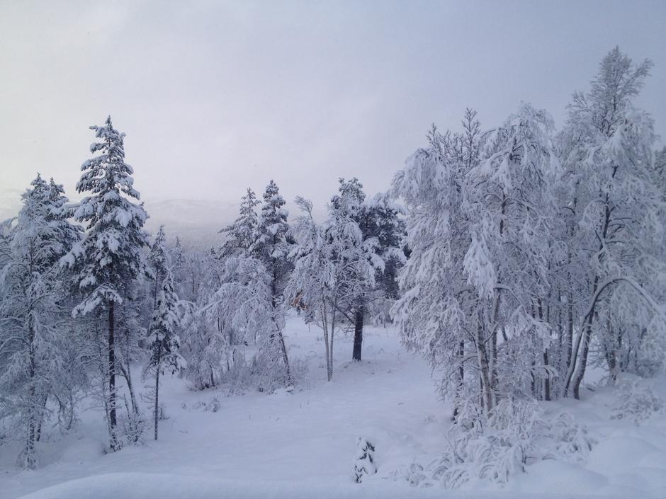 fra Berdalen 18.11., noe mer snø nå, men ganske like forhold