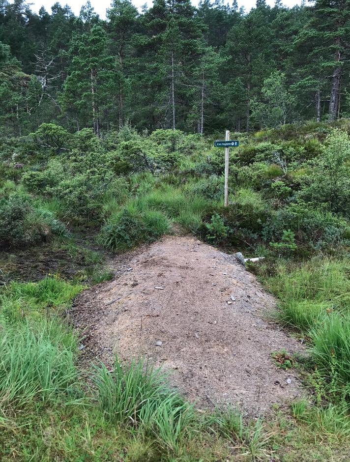 Torsdag 13.8: stistart til Høgafjellet (868 moh) fra Blomdalsleitet.
