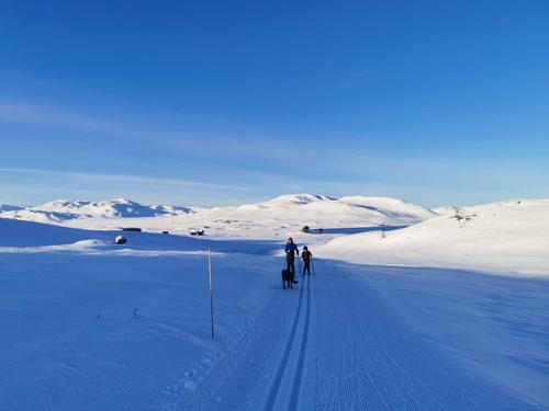 Dra til fjells for en skitur