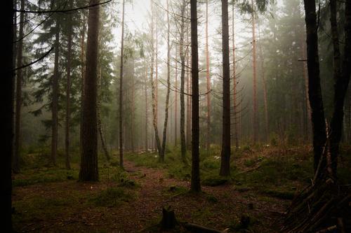 Bildet er tatt innover i Nordmarka en dag det var skikkelig tåkevær. Trolsk stemning.