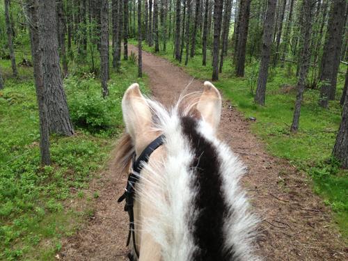 Ridetur i skogen