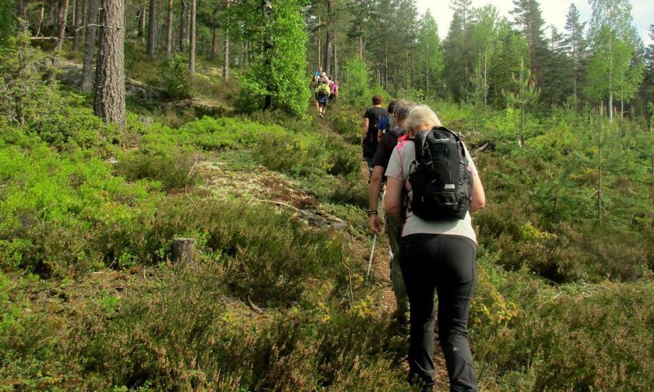 Fine skogsstier oppover til ca. 280 moh