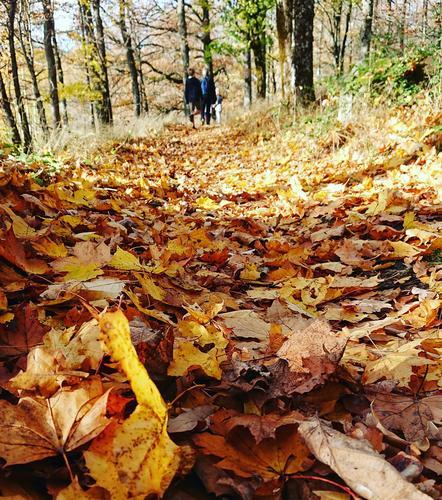 Høsttur  i Europas nordligste eikeskog på vakre Nesodden.