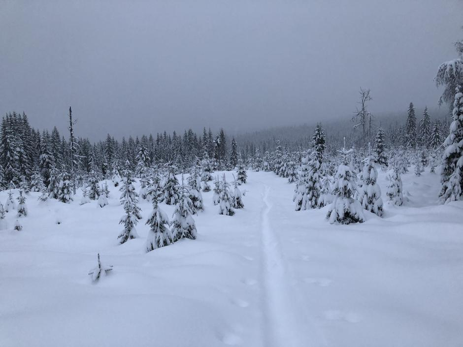 Tung snø å gå i, masse krefter i bruk!