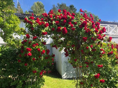 Blomstringstid ved Oslofjorden.