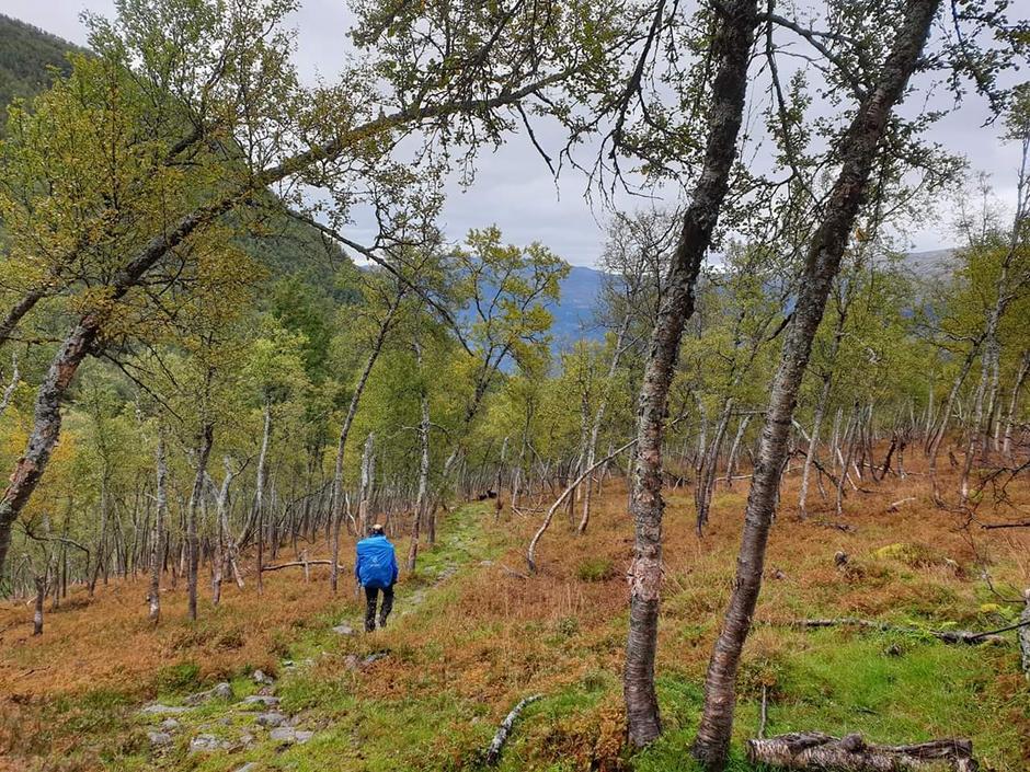 Nedover Ljosdalen mot Flåm.
