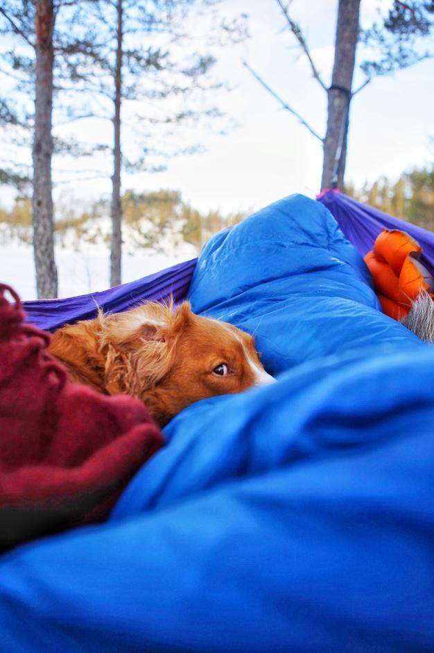 Overnatting med hengekøye. En vintermorgen i Kilebygda, Skien, Telemark.