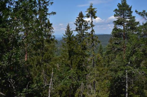 Litt utsikt mellom trærne