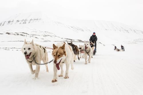 Hundekjøring på Svalbard