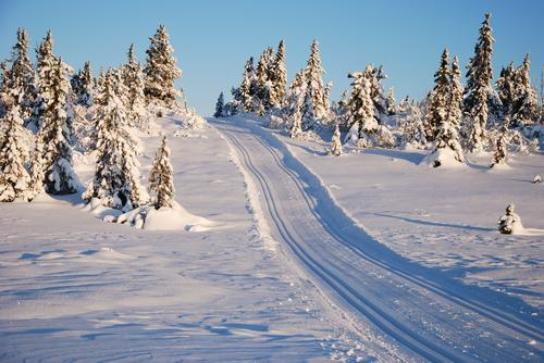 Uke 49: nysnø i helga gir fine skiforhold på Hedmarksvidda!