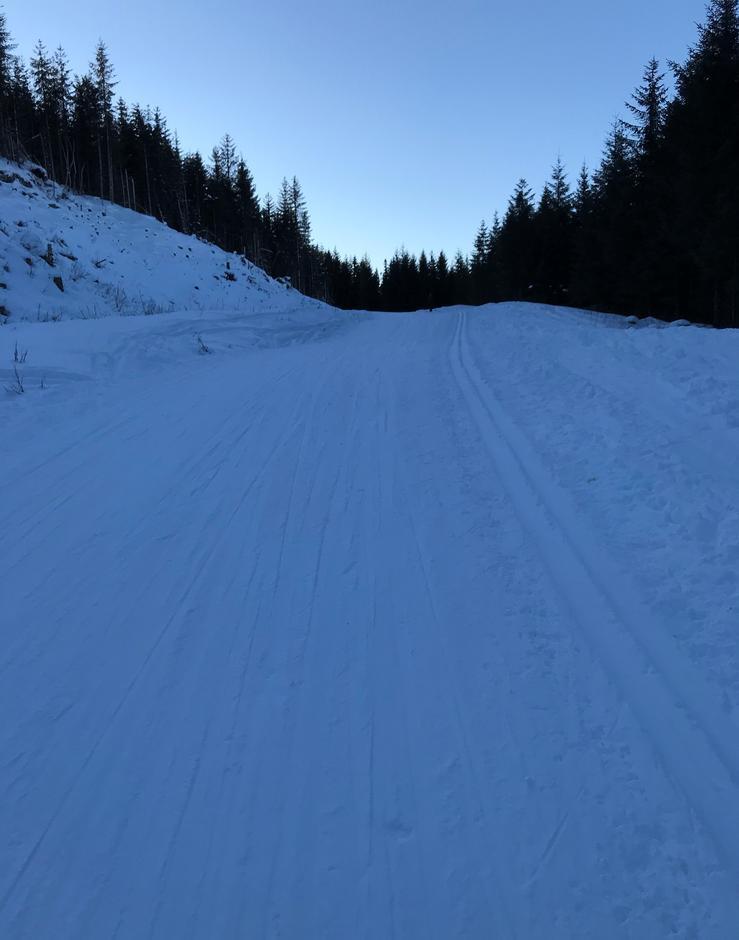 Torsdag 11.2: Preppa skogsvei første km. Totland-Livarden